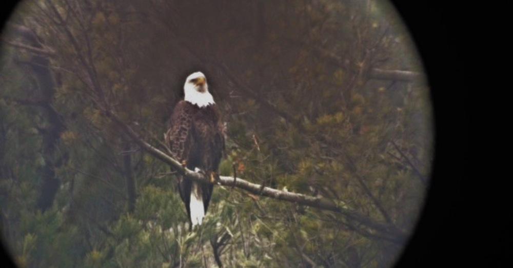 Large 1490030973 eagle