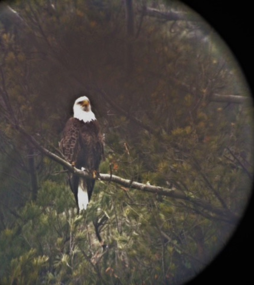 Small 1490030972 eagle