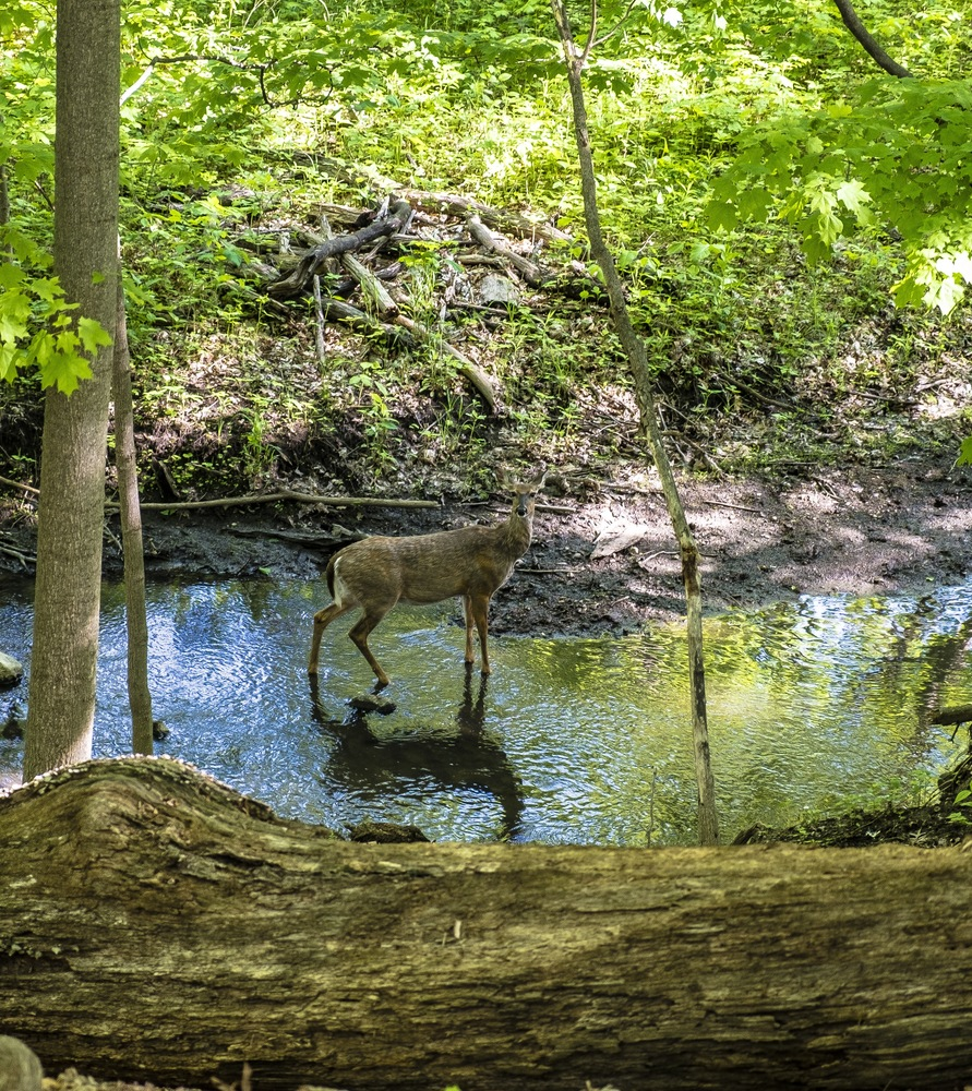 Article 1490030763 deer