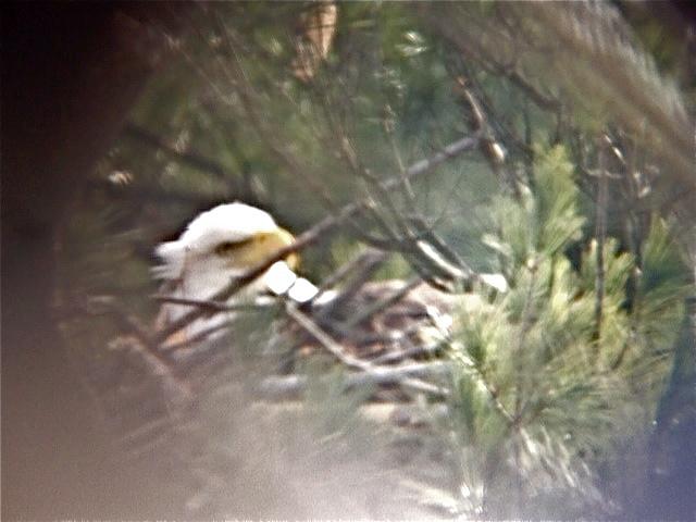 Original 1490030973 nesting
